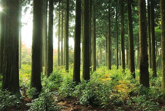 이달의 산림 뉴스 | 국립 산림과 학원 웹진